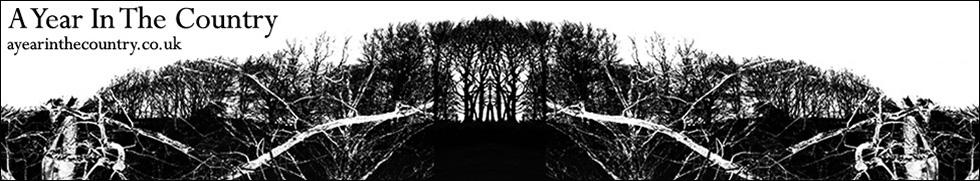 AYITC_header_1px_black_stroke